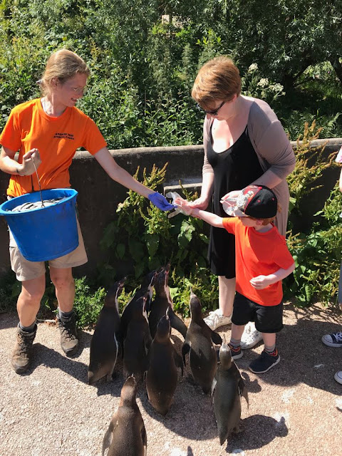 Mum and son feeding penguins with a zookeeper handing them fish