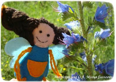 феечка из фетра, синяк обыкновенный, синий цветок, колючий цветок