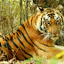 Bandhavgarh National Park - Famous For High Tiger Density - Madhya Pradesh - India