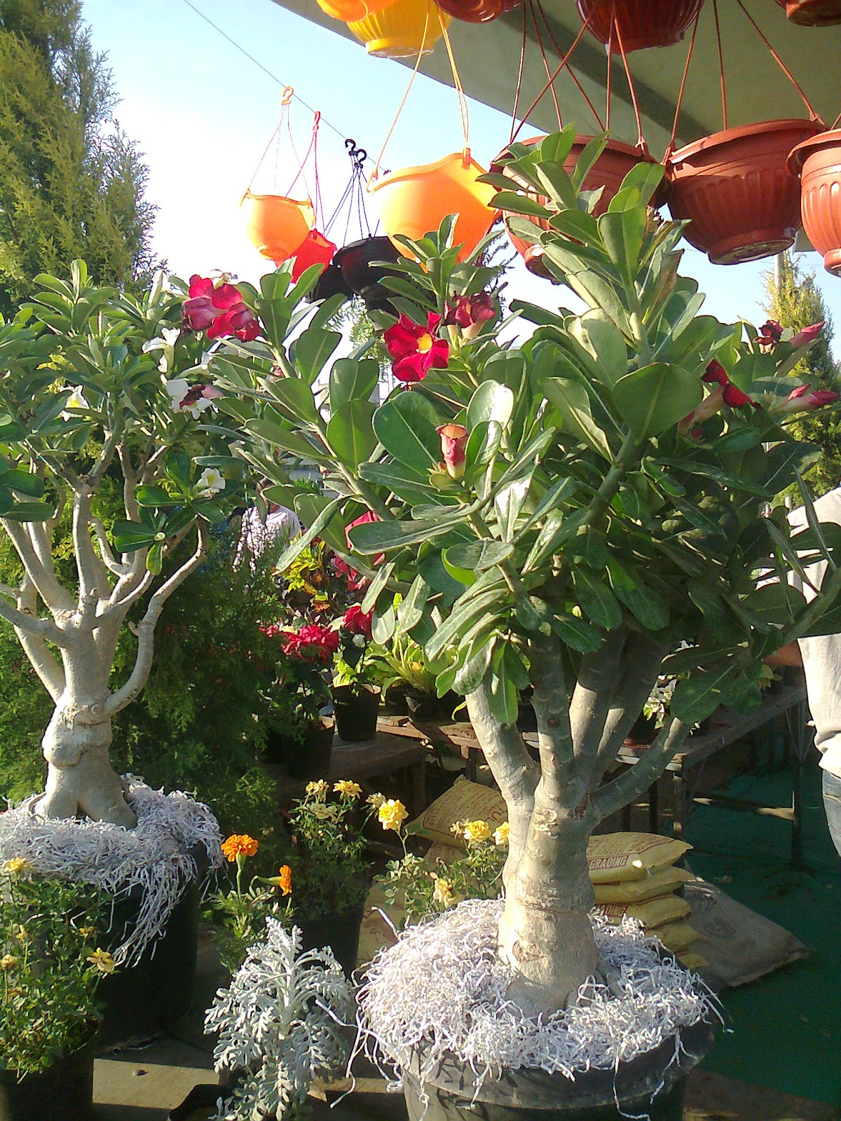 Garden Bush: Green Ahmedabad: