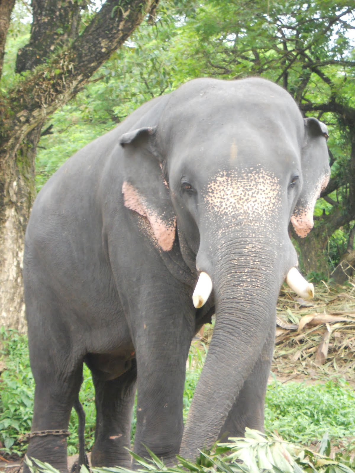 Elephant In Kerala With Names
