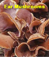 Herbs Medicine use Ear Mushrooms