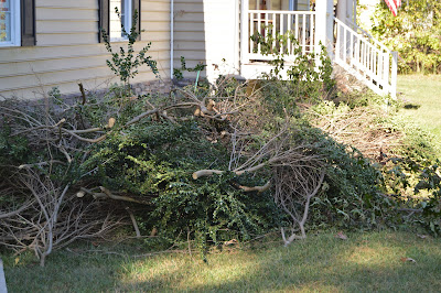 Mike ripped out the bushes in front of our house.