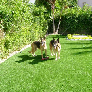 Greatmats artificial turf for dog agility training