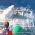 Tiburón Desata El Terror Al Romper La Jaula De Un Buzo
