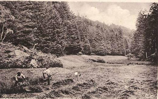 CPA forêt d Auvergne