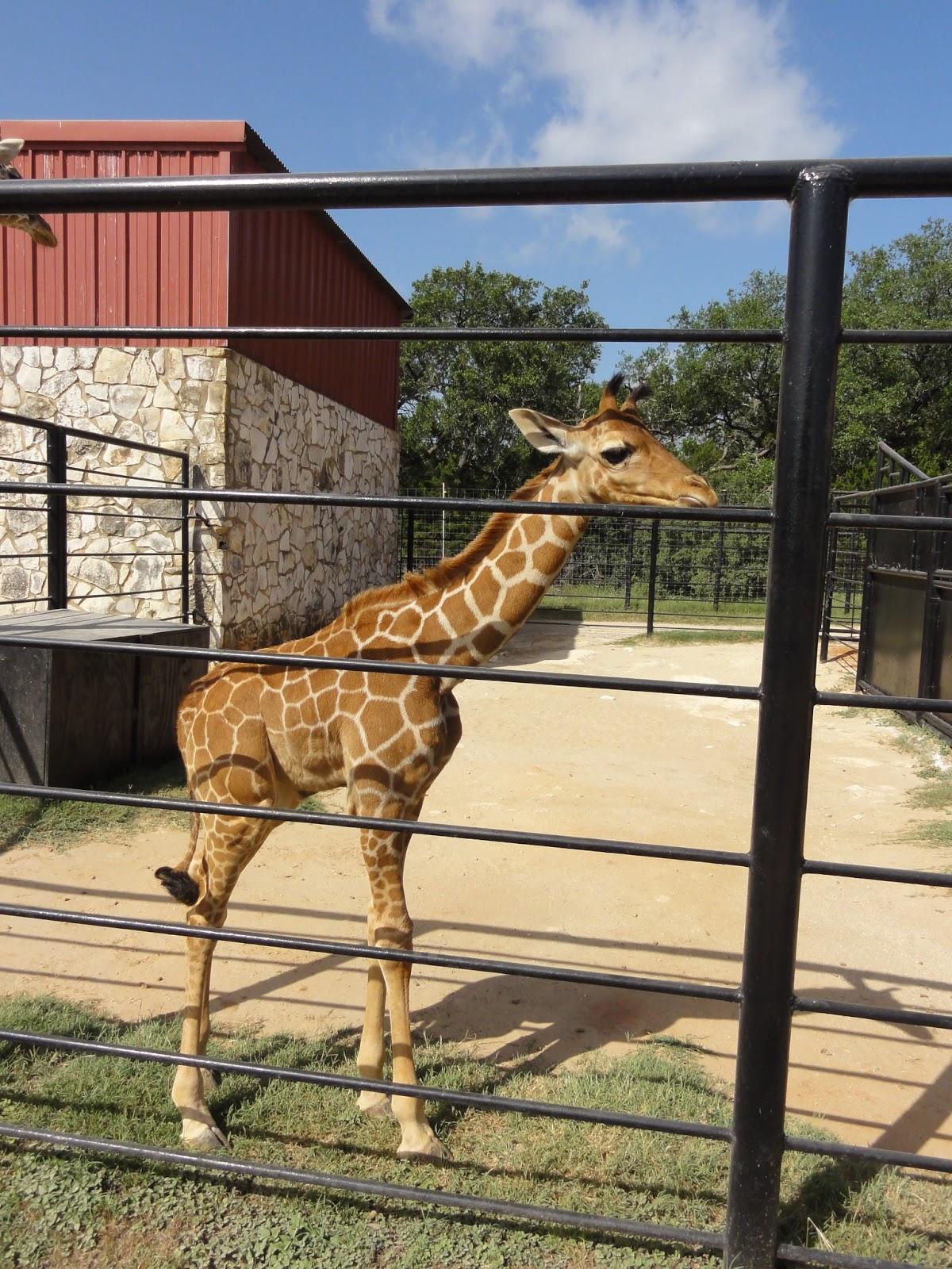 Austin Top 50 Fun In The Sun Natural Bridge Wildlife