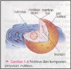 Nukleus atau inti sel dan komponen penyusunnya