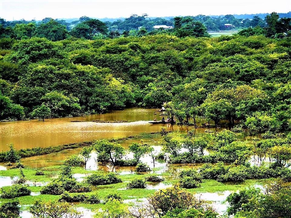 ratargul swamp forest bangladesh