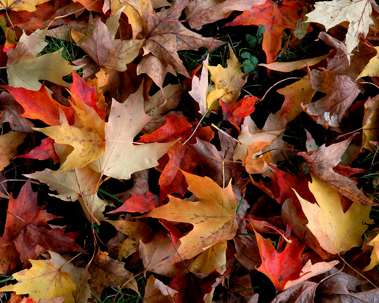 Free Desktop Wallpaper Autumn Leaves: Fall Wallpaper GALERY PHOTO CELEBRITY