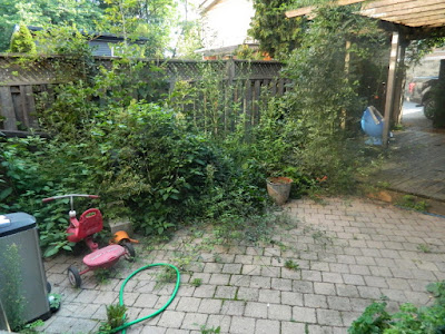 Playter Estates Toronto late summer garden cleanup before by Paul Jung Gardening Services