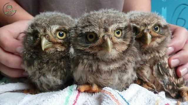 proteger la faune, pétition, nord, centre de soins, oiso, association, sauver des vies, ils ont besoin de nous
