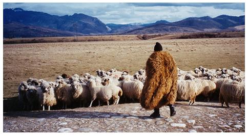Cioban cu turma pe platourile alpine