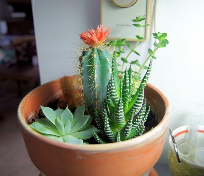 Garden Design Garden Design With Garden Indoor Cactus Garden