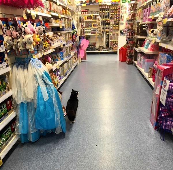 pet store southampton