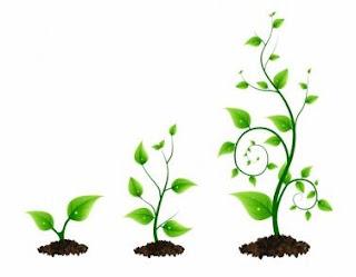 Definisi Pertumbuhan Tanaman Secara Umum