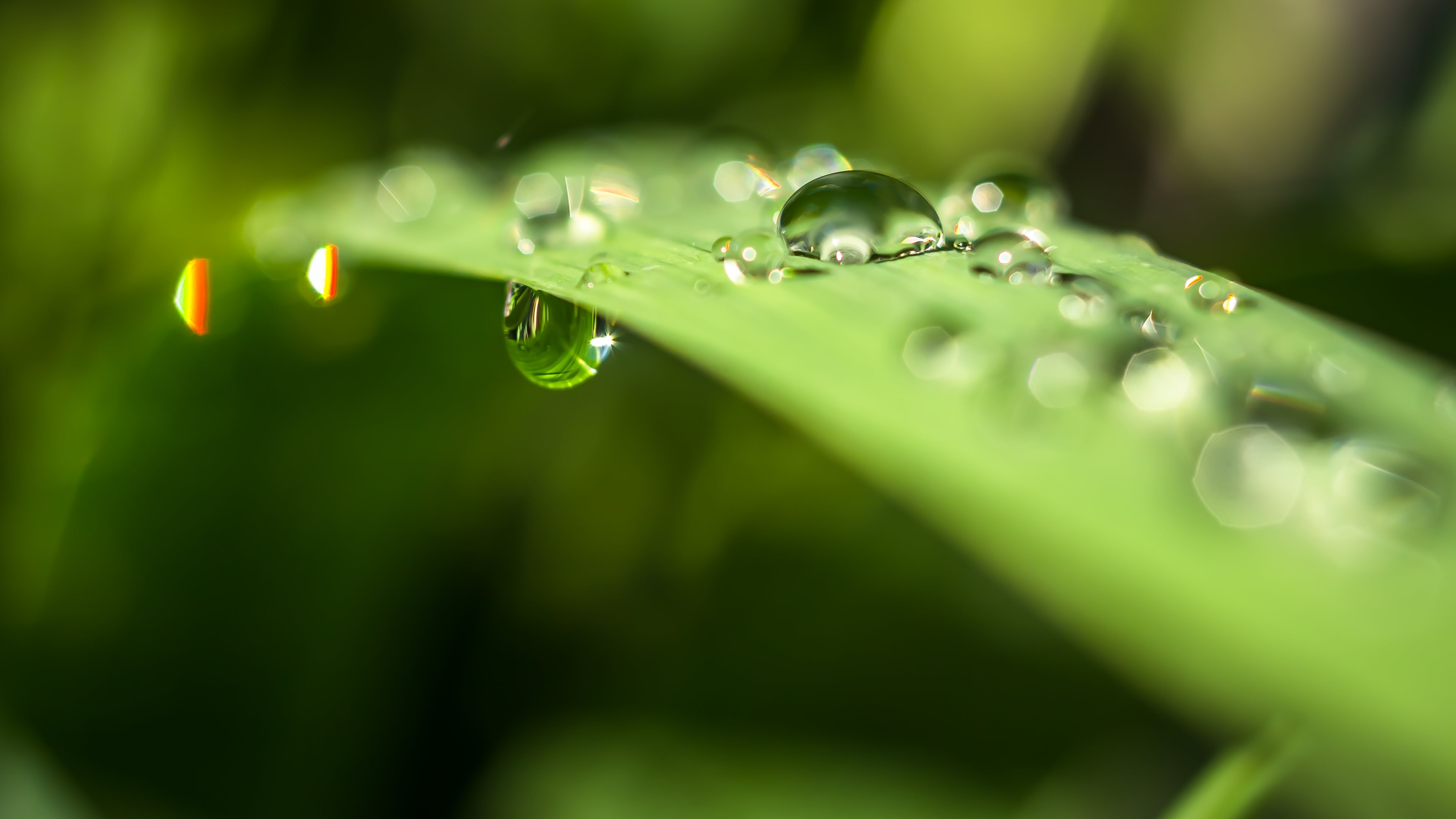 droplets on leaves 4k - photo #44