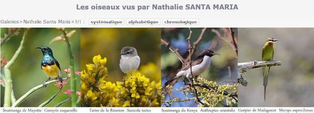 http://www.oiseaux.net/photos/nathalie.santa.maria/