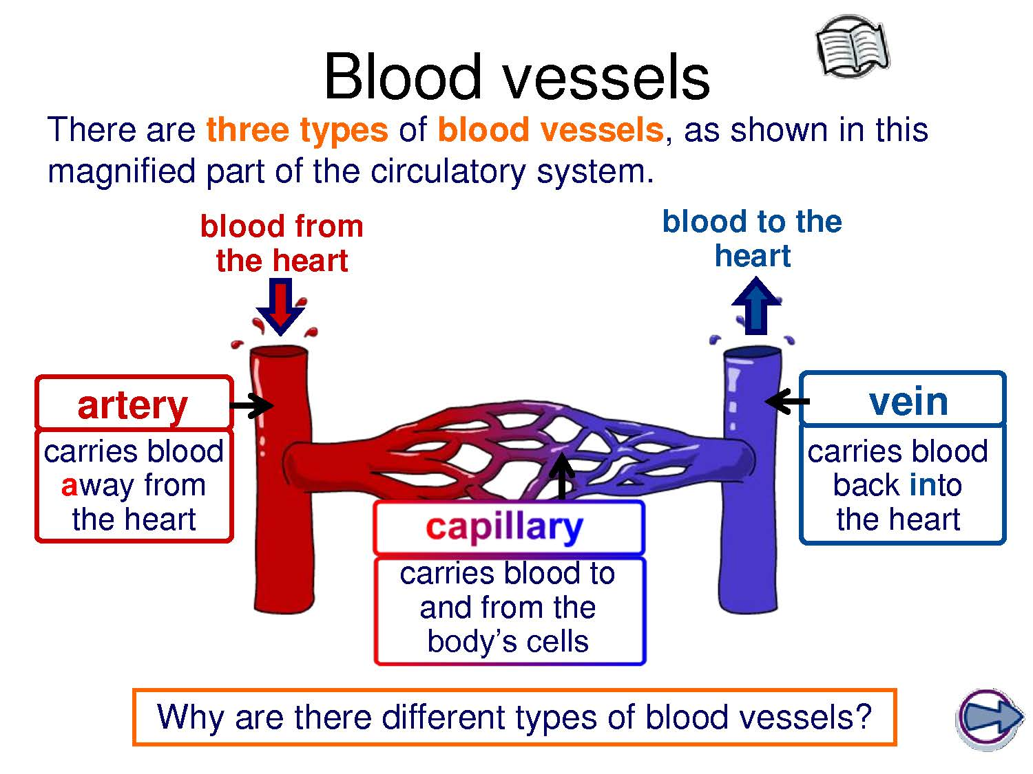 Is The Movement Of Blood Through The Body Blood Vessels