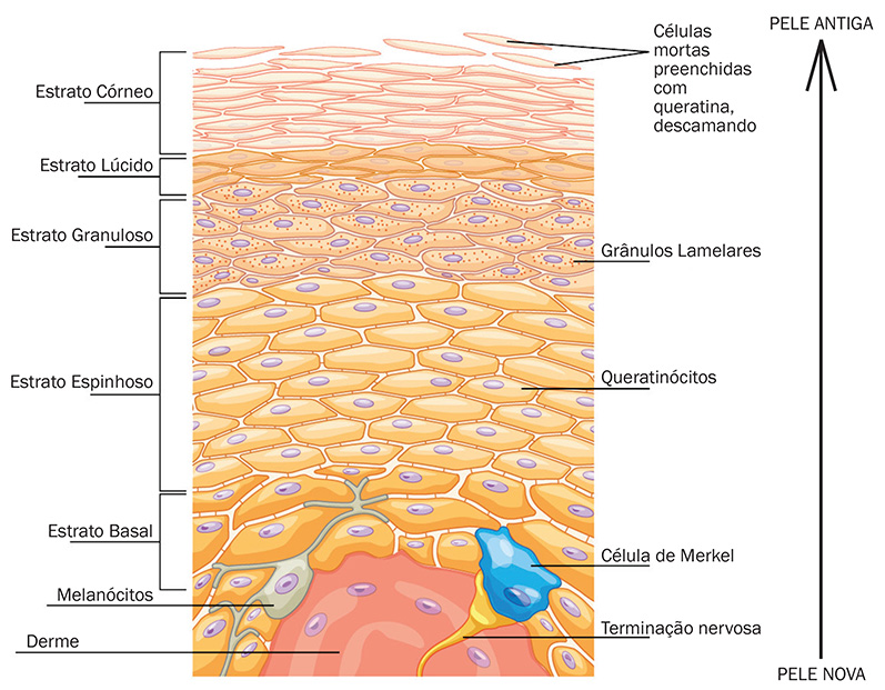 A ciência por trás da esfoliação profissional - Negócio Estética