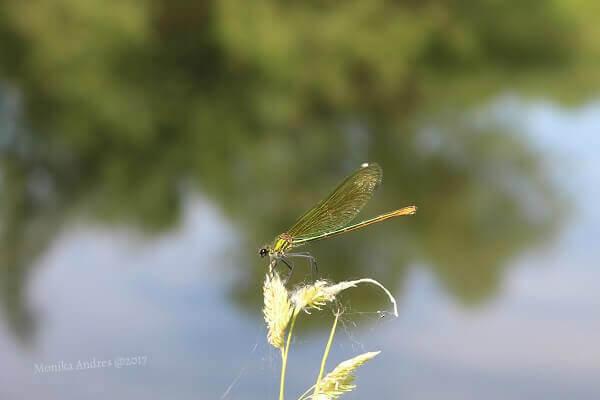 Nahaufnahme grüne Libelle / eigene kleine Welt