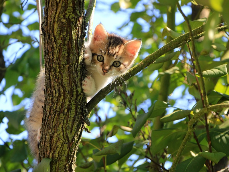 Download Tree Climber Cat HD wallpaper. Click Visit page Button for More Images.