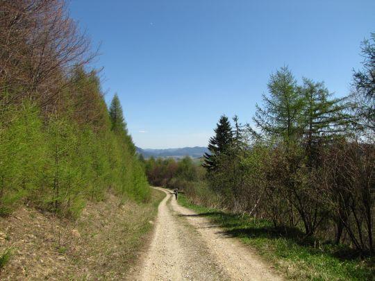 Droga na południowych zboczach Cisówki (777 m n.p.m.)