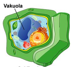 """Makalah Biologi Sel """"Sistem Endomembran, Perbedaan Sel ..."""