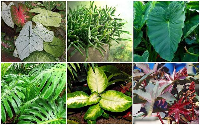 Plantas venenosas - precauções e cuidados