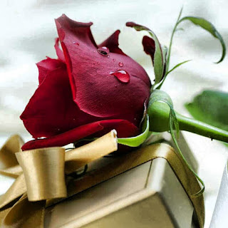 Flores: Rosas color guinda o rojo quemado