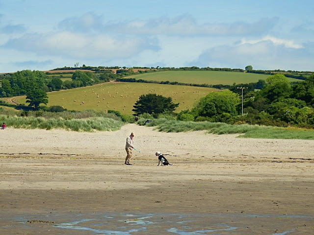 Dog on Par Beach, Cornwall