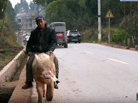 Chinese Farmer seen riding his pig on his way to the market
