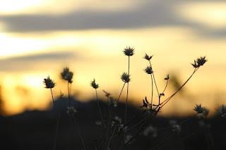 Puisi Persahabatan Tentang Hari Esok Yang Dijanjikan
