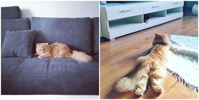 dzień kota pers