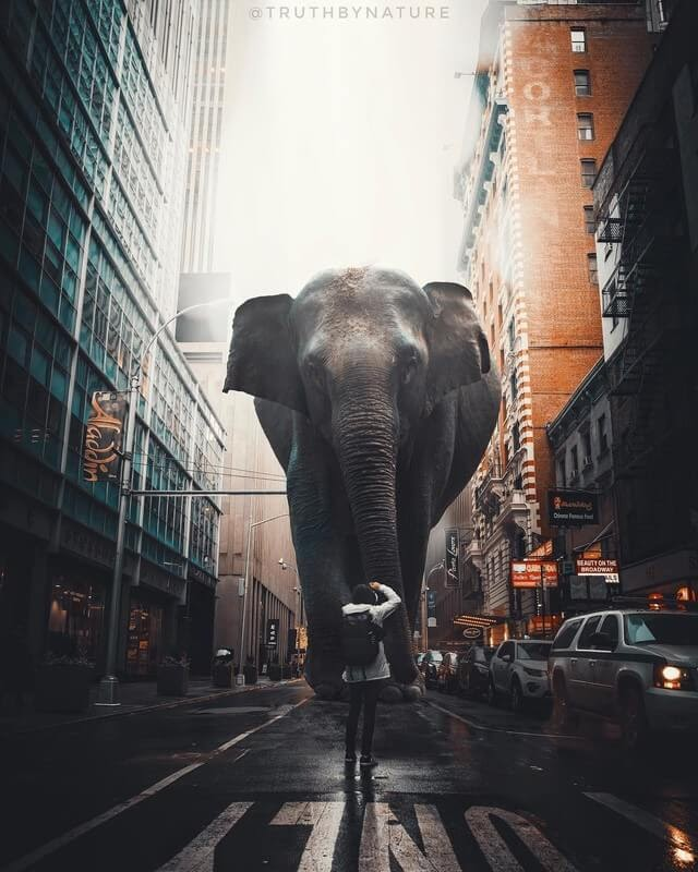 03-Elephant-truthbynature-Surrealism-in-Animal-Photo-Manipulation-www-designstack-co