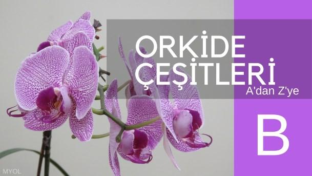 Orkide Çeşitleri B Harfi