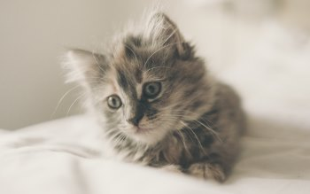 Wallpaper: Cutest Kitten