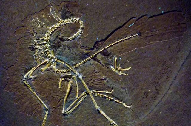 Archaeopteryx e historia
