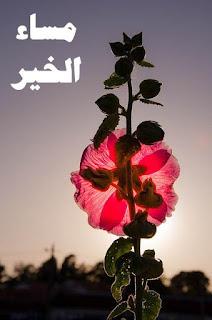 مساء الخير , صور مكتوب عليها مساء الخير والحب والورد