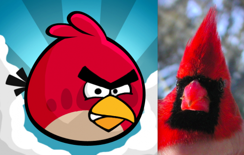 Northern Cardinal Angry Bird