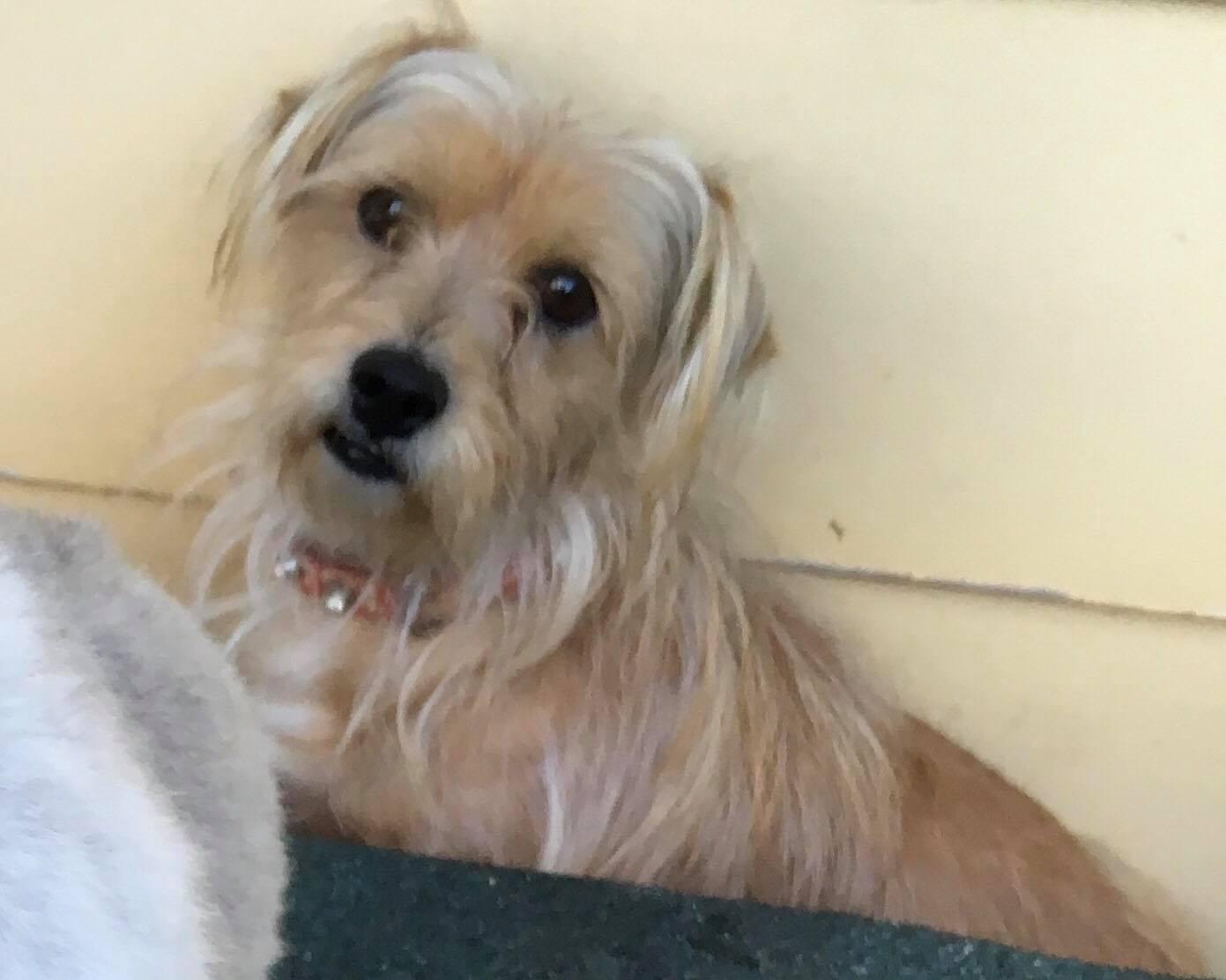 Dog Bless Rescue Victoria