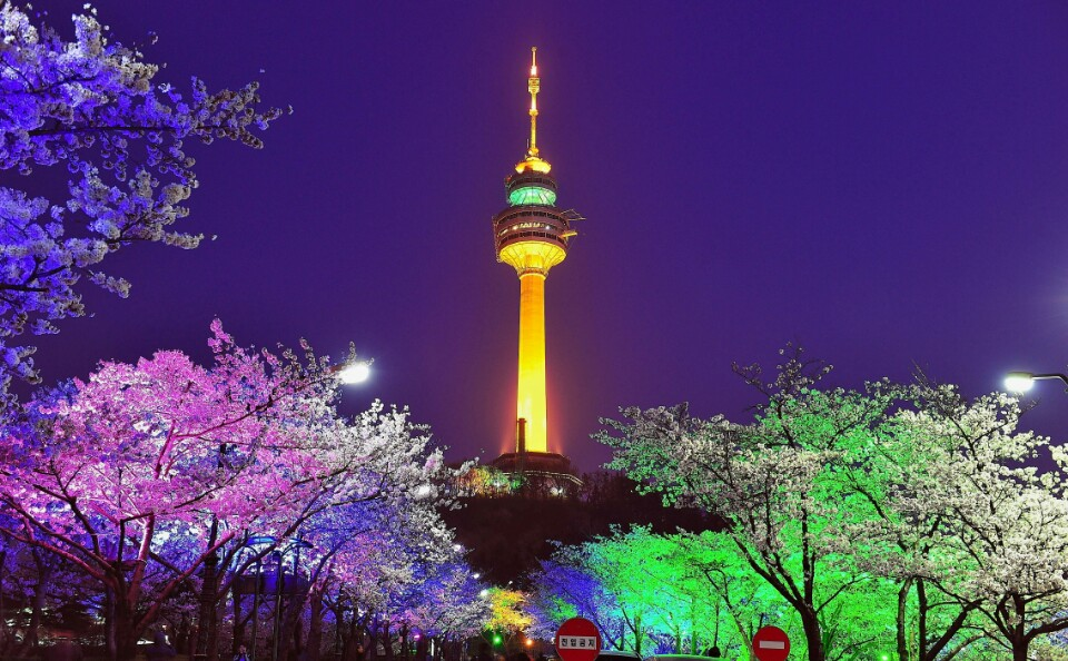 Fun & Free Daegu Travel: Fluttering Cherry Blossoms at ...