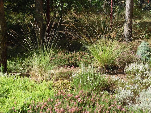 trawy na wrzosowisku