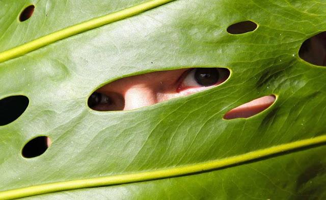النباتات,ترى,رؤية,عين,بكتيريا,طحالب,كائنات,أحادية الخلية