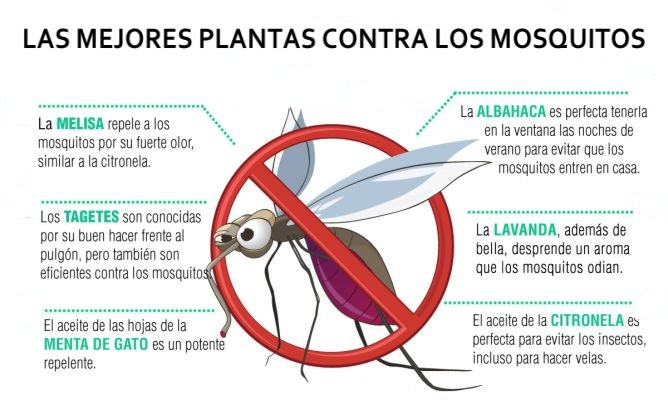 Cuaderno de pesca - Plantas contra los mosquitos ...