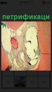 На стене показано отложение солей в необычной форме петрификация