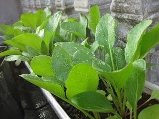 ide menanam tanaman
