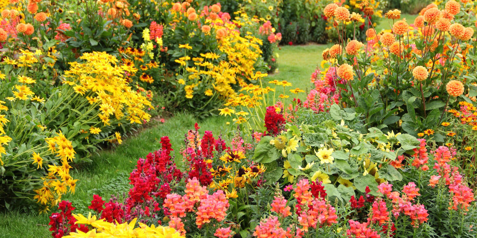 Ornamental flowering plants for autumn colour the garden for Popular fall flowers