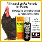 Herb Rx: Natural Remedies for Respiratory Issues in Chickens | Fresh