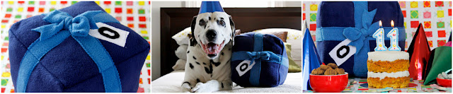 Dalmatian dog with homemade dog toy shaped like a wrapped birthday present